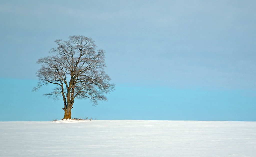 Cold Lonely Tree - 012614