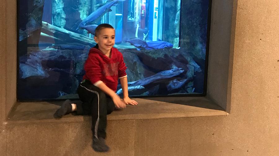 Kindergarten aged boy in front of an aquarium