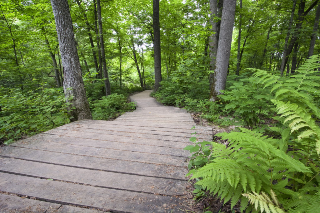 Wooden pathway through native Minnesotan forest.